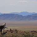 Watching Over The Land by Gene Praag
