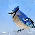 Watching The Snow by Betty LaRue