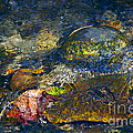 Water Abstract by Sharon Talson