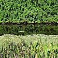 Water And Green by Robert VanDerWal