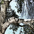 Water Beyond The Tree by Karen  W Meyer