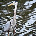 Water Bird by Linda Kerkau