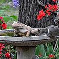 Water Break by Pam Garcia