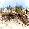 Water Color Sketch  Beach Dune by Elaine Plesser