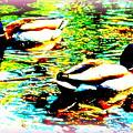 So Water Dance Is For Dancing Ducks  by Hilde Widerberg