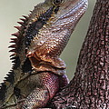 Water Dragon by Bruce J Robinson
