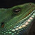 Water Dragon Face Vietnam by Mark Moffett