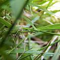 Water Droplet On Grass Blade by Corinne Elizabeth Cowherd