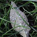 Water Droplets On Leaf by Nicole Berna