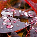 Water Drops After The Rain by Lena Photo Art