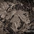 Water Drops On Fallen Leaves by M Dale