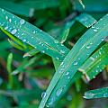 Water Drops On The  Grass 0004 by Terrence Downing
