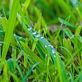 Water Drops On The  Grass 0017 by Terrence Downing
