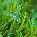 Water Drops On The  Grass 0018 by Terrence Downing