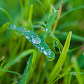 Water Drops On The  Grass 0019 by Terrence Downing