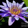 Water Flower by Nick Zelinsky