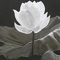 Water Flower by Stephen W Keller
