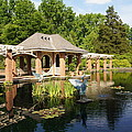 Water Garden Serenity by Megan Cohen