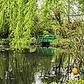 Water Garden Wonder by Elvis Vaughn
