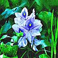 Water Hyacinth 1 by John Trommer