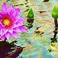 Water Lilies 002 by Robert ONeil