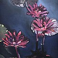 Water Lilies At Sunset by Donna Tuten