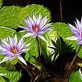 Water Lilies by Darlene Freas