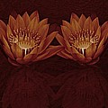 Water Lilies In Deep Sepia by David Dehner