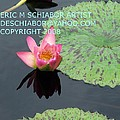 Water Lilies Orange Pink by Eric  Schiabor