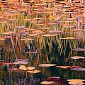 Water Lilies Re Do by Chris Anderson