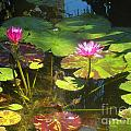 Water Lilly Garden by Jennifer Lavigne