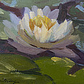 Water Lily 1 by Diane McClary