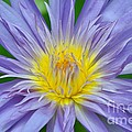 Water Lily 16 by Allen Beatty