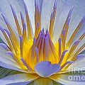 Water Lily 18 by Allen Beatty