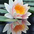 water lily 45 Water Lily with Reflection by Terri Winkler