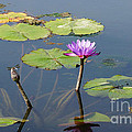 Water Lily And Dragon Fly One by J Jaiam