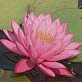 Water Lily And Guest by Dave Wangsness