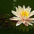 Water Lily And Pad by MTBobbins Photography
