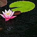 Water Lily And Raindrops by Craig Caldwell
