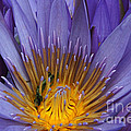 water lily from Madagascar by Rudi Prott