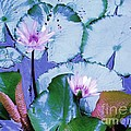 Water Lily II by Ann Johndro-Collins