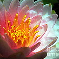 Water Lily In The Sun by Renee Trenholm