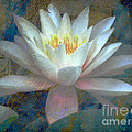 Water Lily by Irina Hays