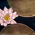 Water Lily by John Shipp