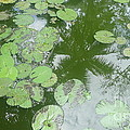 Water Lily Leaves And Palm Trees by Nora Boghossian