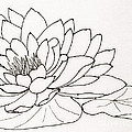 Water Lily Line Drawing by Anita Lewis