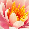 Water Lily by Lucy Raos