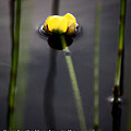 Water Lily  Luke  by Mark Duffy