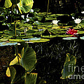 Water Lily Pond by Paul W Faust -  Impressions of Light