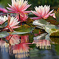 Water Lily Profusion by Leda Robertson